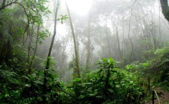 Millas Latam Mega Canje Colombia 1