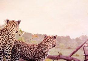Latam Pass Millas Sudafrica Junio 2019 Selva Safari 1