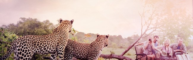 Latam Pass Millas Sudafrica Junio 2019 Selva Safari 1